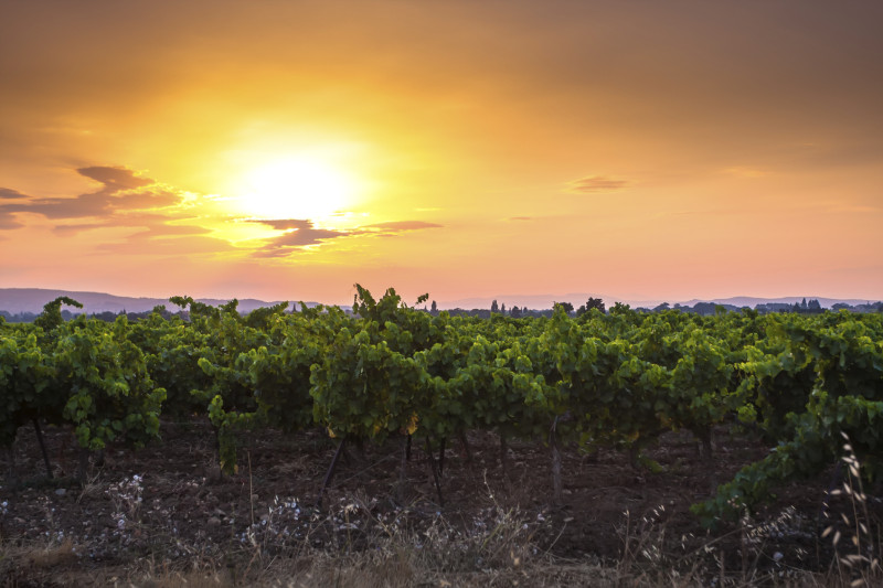 Beautiful Sunset over a vineyard in French Provence